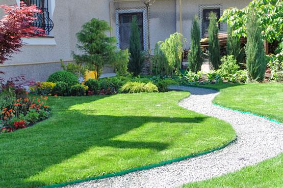 Фото как посадить газон